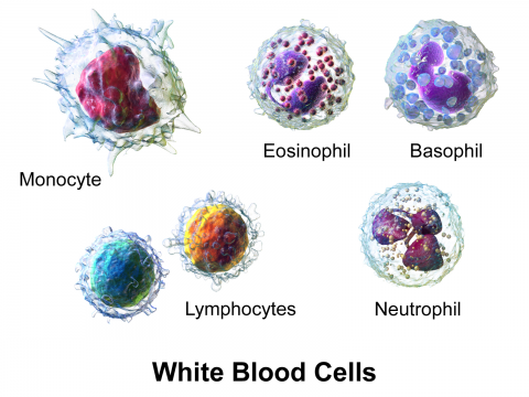 Causes of High White Blood Cell Count