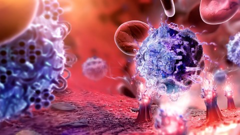 The Immune System, Inflammation, and Cancer